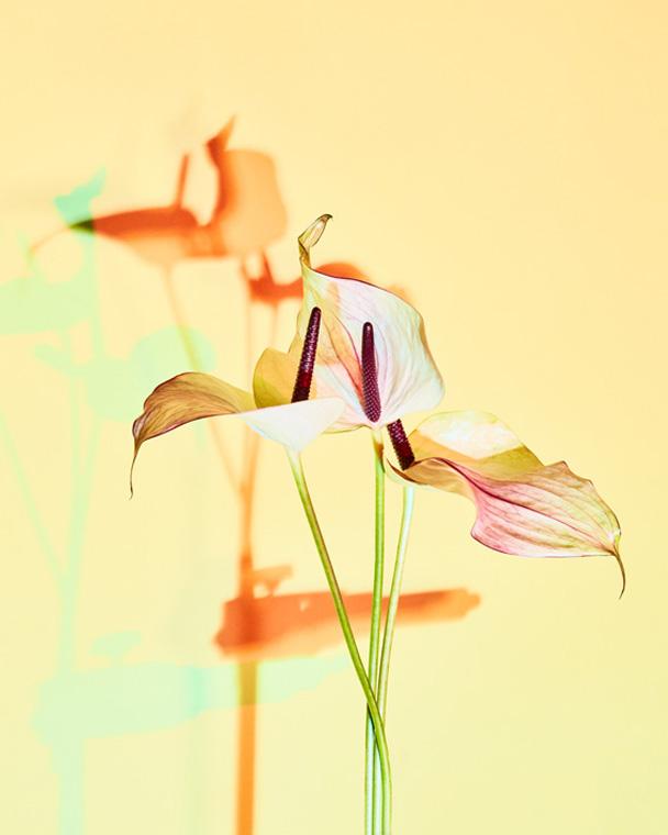 Leaves and Flowers – Nicola Galli